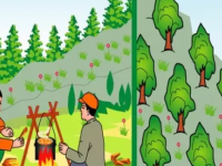 """野外""""玩火""""要不得:因引发森林火灾,湖北多名肇事者被拘"""
